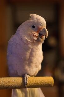 Bad Joke Bird